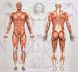 Anatomy Diagram of Human Body Anatomy.AskTheTrainer.com