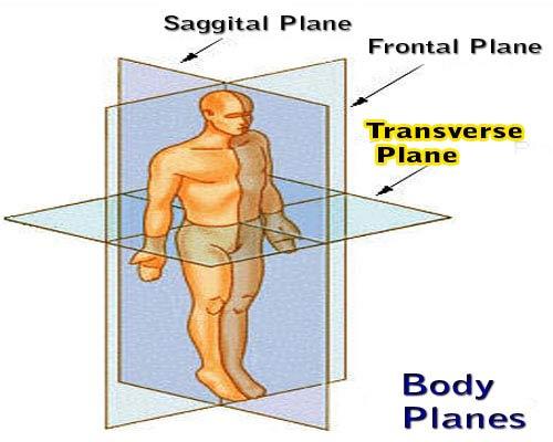 3 Planes Of Human Movement
