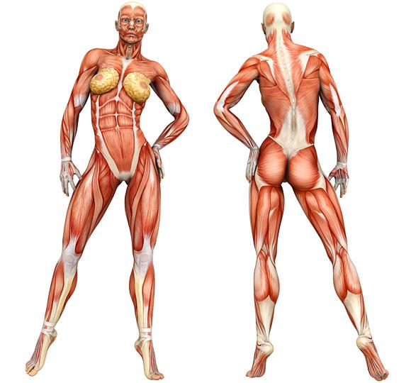 Exercise Information Guide Men / Women: Best Exercises for the Body