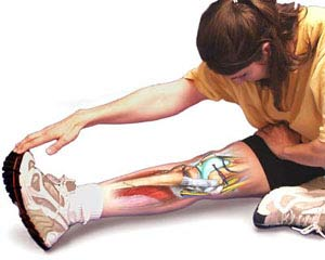 Flexibility for Physical Fitness