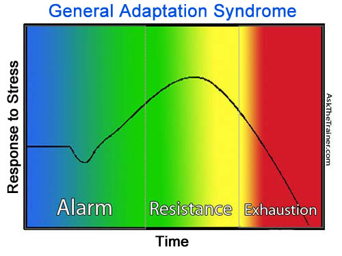 General Adaptation Syndrome Weight Training