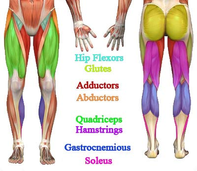 Legs and Butt Exercise Anatomy