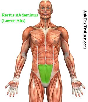 Lower abdominals are part of the Abs