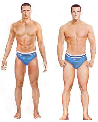 Male Muscle Gain
