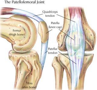 knee saddle joint patella lunge exercise