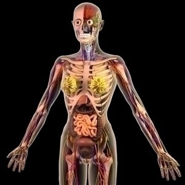 anatomy diagram of human body: animated muscle anatomy and physiology, Muscles