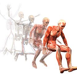 Human Body Anatomy Illustration