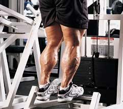 calves calf muscles
