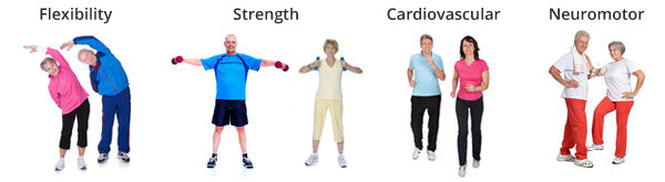 four components senior fitness training programs