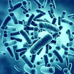 Prebiotics vs Probiotics bacteria