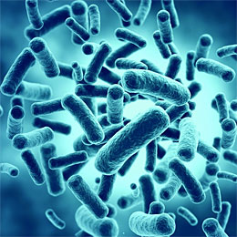 healthy probiotics bacteria