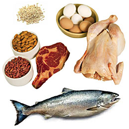 high protein nutrition food sources