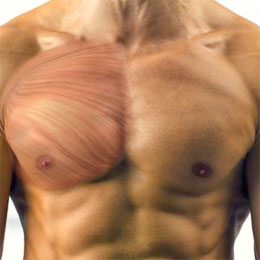 Upper Chest – The Clavicular Head