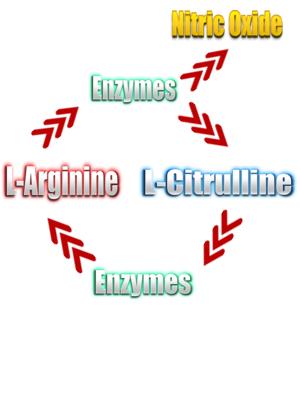 arginine citrulline loop