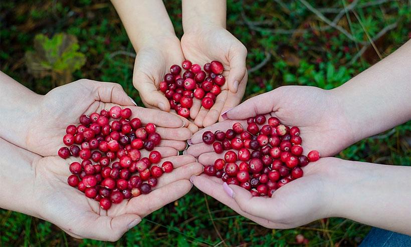 Cranberry Juice Skin Benefits