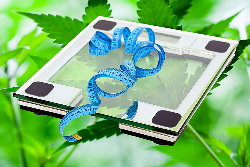 cbd weight loss tips